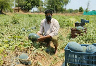 लॉकडाउन में भी किसान तरबूज ,खरबूज लगा  कमा रहे हैं लाखों