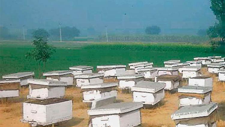 स्वसहायता समूह की महिलाओं को मधुमक्खी पालन का प्रशिक्षण