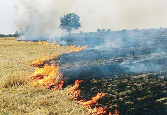 नरवाई में आग लगाने वाले लोगों पर एफआईआर