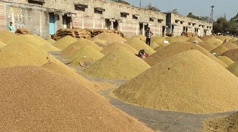 राजस्थान  में अभी तक एमएसपी पर 2 लाख 92 हजार टन गेहूं खरीद हुई