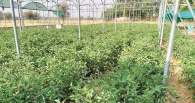 फलदार पौधे लगाने की तैयारी अभी से करें