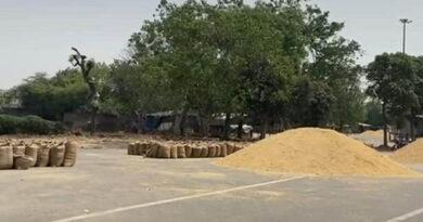 Wheat-purchasing1