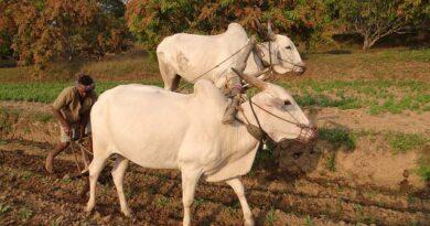 किसानों के खाते में 56,000 करोड़ रुपये डीबीटी के जरिए जमा किए गए