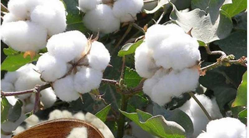 कृषि विभाग खण्डवा द्वारा बीज विक्रेता का लायसेंस निलंबित
