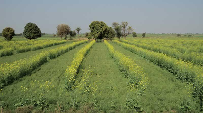 जैव विविधता और कृषि