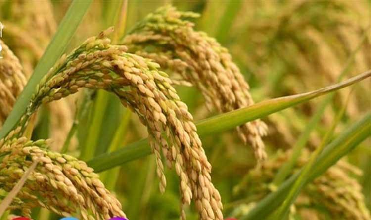 अलिराजपुर में खाद, बीज, के नमूने लिए जायेंगे