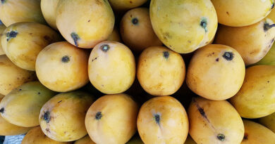 India exported mangoes to South Korea