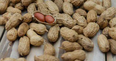 मूंगफली की फसल को हर वर्ष कतरा से हानि होती है बचाव के उपाय बतलायें।