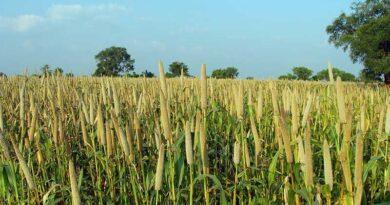 खरीफ फसलों हेतु समितियों में उर्वरकों की पर्याप्त उपलब्धता सुनिश्चित करें -कलेक्टर श्री सिंह