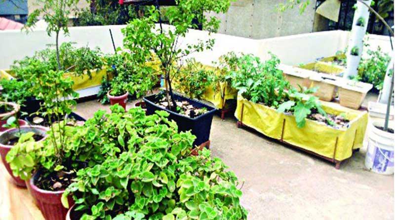 कोरोना लॉकडाउन में करो छत पर बागवानी
