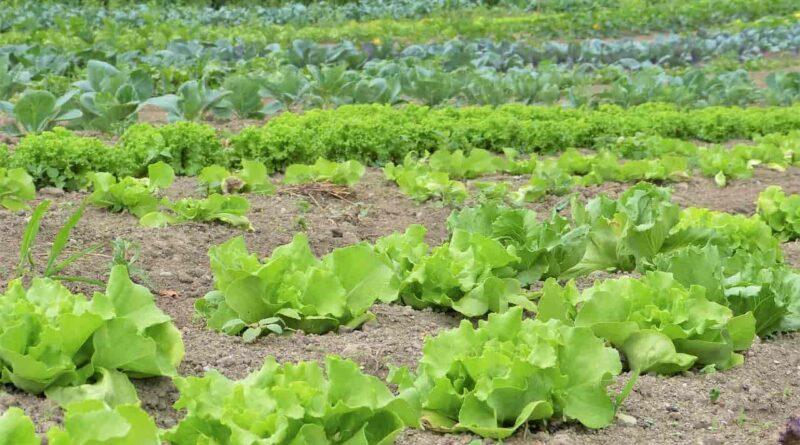 जैविक खेती ही प्रकृति को बचाने का एकमात्र तरीका है