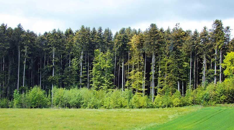 न्याय योजना में धान बुवाई न कर पेड़ लगाने वाले किसानों को 10 हजार रु. एकड़ मिलेंगे: छत्तीसगढ