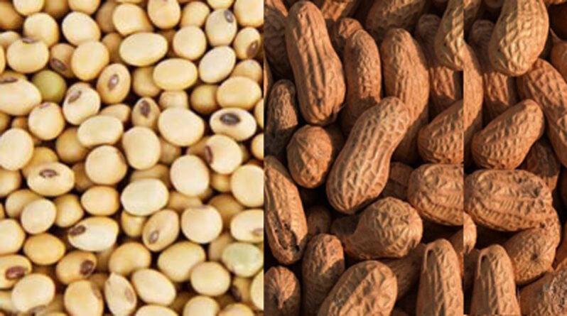 सोयाबीन और मूंगफली मिनी किट्स