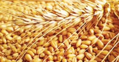 महामारी के दौरान खाद्य सुरक्षा के लिए आईसीएआर की भूमिका सराहनीय
