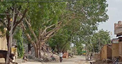 सगड़ोद में आबादी से दुगुने लगे हैं वृक्ष