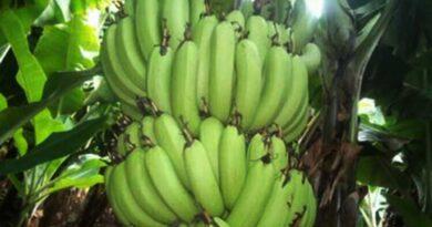 केले की आधुनिक खेती पर वेबिनार 3 अगस्त को