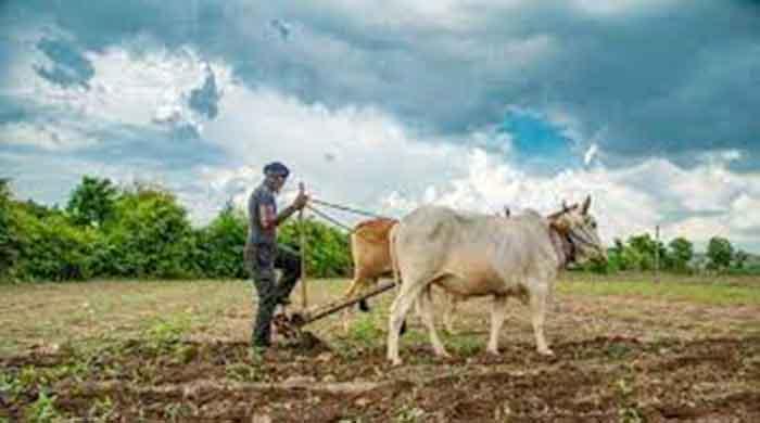 तीन से चार इंच बारिश होने पर ही बोनी करें किसान