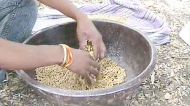 बीजोपचार के प्रति किसानों में जागरूकता बढ़ी