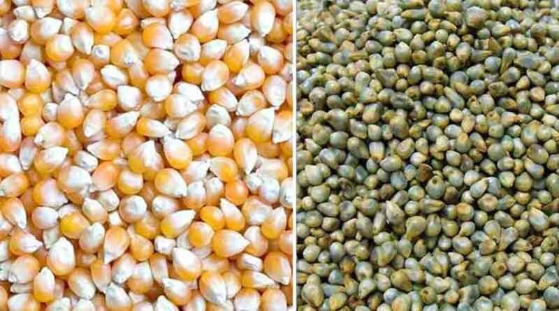 खाद-बीज के अमानक नमूनों के लाट का विक्रय प्रतिबंधित
