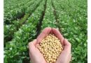 50 वर्षों में सोयाबीन की खेती 1.30 करोड़ हेक्टेयर में फैली