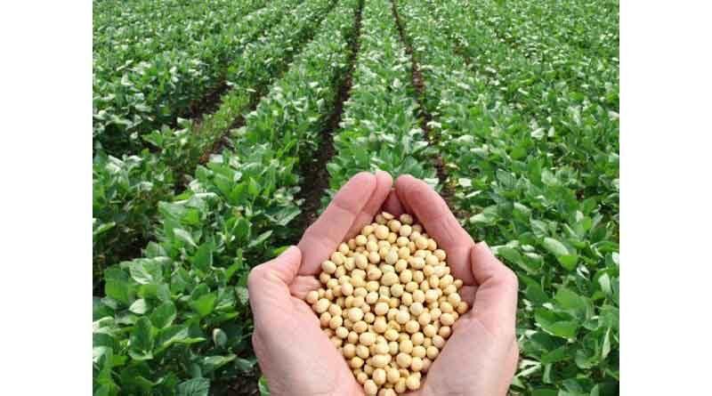 23 लाख हेक्टेयर में हुई खरीफ फसलों की बुआई