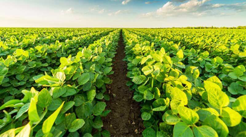 सोयाबीन फसल को सूखे से बचाने के लिए किसान ये करें