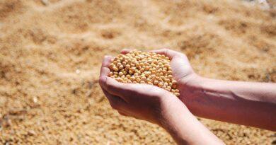 सोयाबीन की खेती कैसे करें, महत्वपूर्ण जानकारी