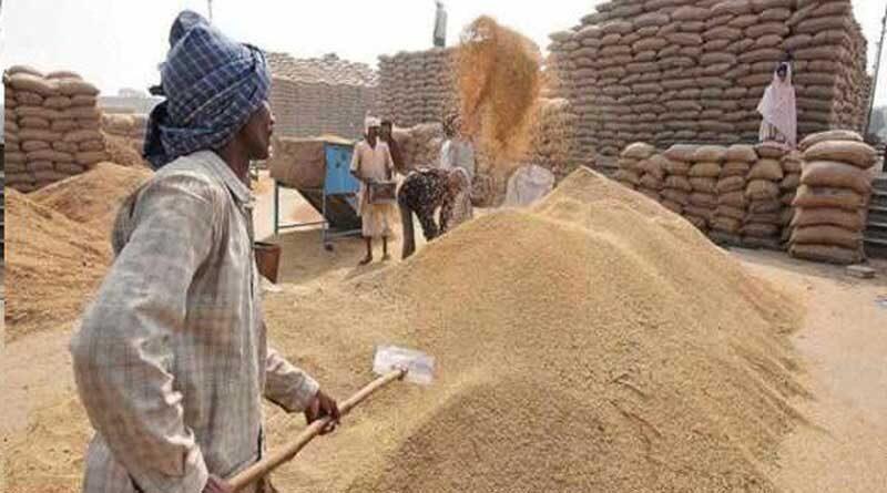 भारत में अब तक 431 लाख मीट्रिक टन गेहूं खरीद हुई