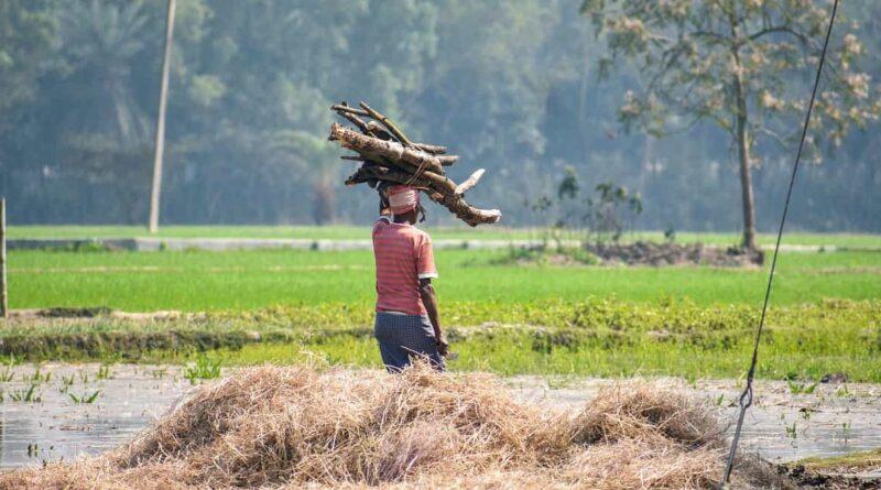 देश में 49.15 लाख किसानों को 85581 करोड़ रुपये का भुगतान
