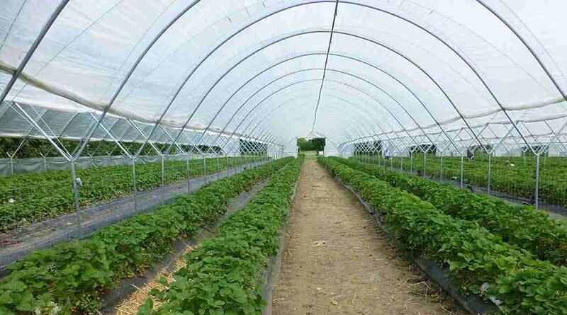 क्लस्टर आधारित संरक्षित खेती में शेड नेट के  वित्तीय लक्ष्य जारी