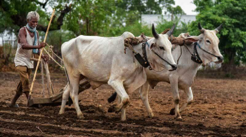 यदि आपको प्रधानमंत्री किसान निधि का लाभ ना मिला हो तो यहां शिकायत करें