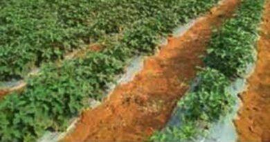 छत्तीसगढ़ में एक लाख पोषण बाड़ियाँ विकसित होंगी