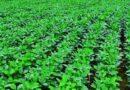 राज्य में किसान 31 जुलाई तक करा सकेंगे फसल बीमा