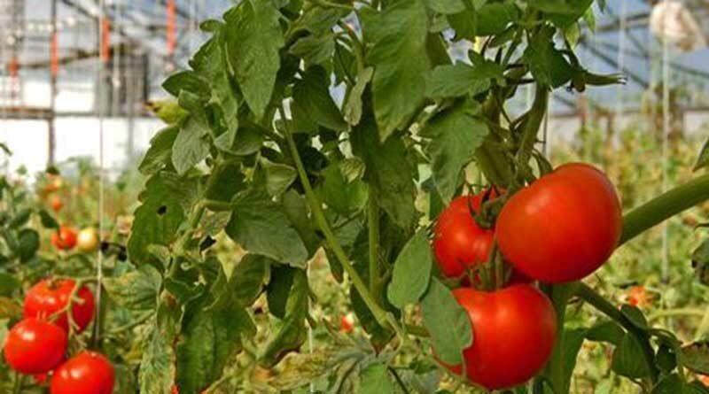 देश में 329 मिलियन टन बागवानी उत्पादन की संभावना