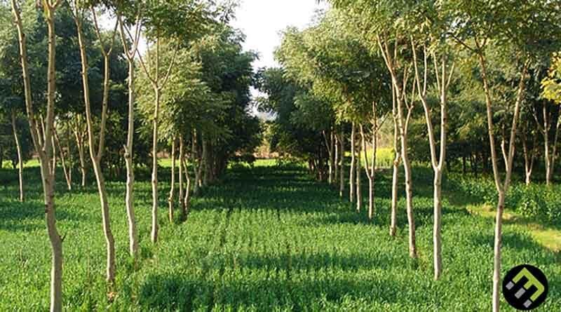 पौध रोपण के लिए मिलेगा 76 लाख का अनुदान