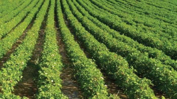 कृषि को पूर्ण लाभ का धंधा बनाने में जुटी सरकार