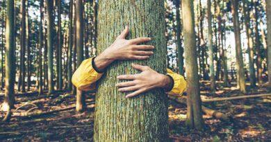 जंगल बचाने की चुनौती