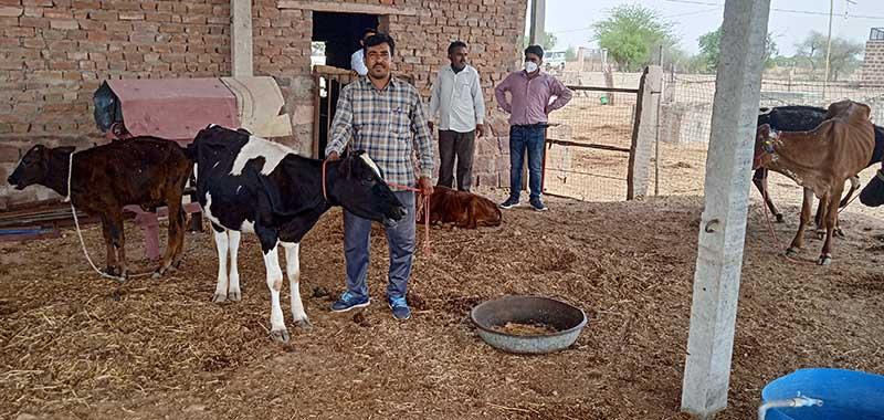 परिस्थितिया विपरीत होने के बावजूद होल्सटीन फ्रीसिएन गायों से सालाना कमा रहे हैं लाखों रुपए