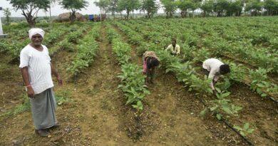 सब्जी की खेती से श्री रामशरण को हो रहा है लाखों का मुनाफा