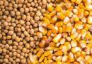 खरीफ में 150 aमिलियन टन से अधिक खाद्यान्न उत्पादन होने की सम्भावना