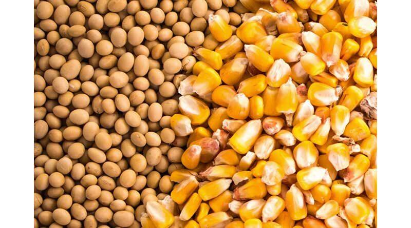 खरीफ में 150 मिलियन टन से अधिक खाद्यान्न उत्पादन होने की सम्भावना