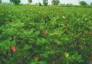 कितनी कारगर है किसानों के लिए एग्रो-मेट एडवाइजरी