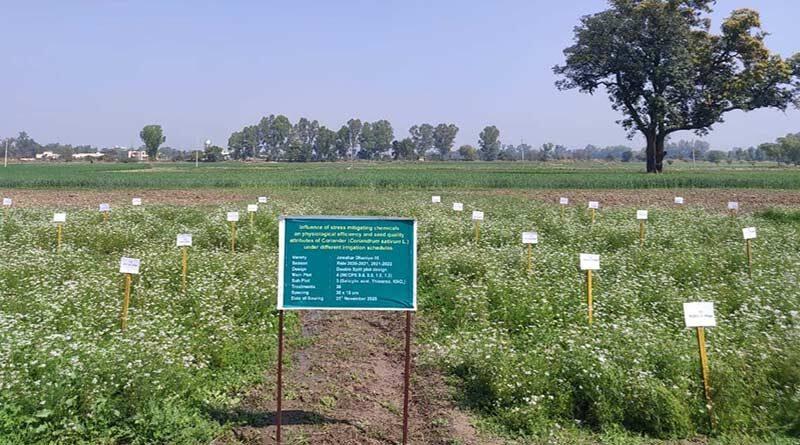 कृषि वैज्ञानिकों ने कोरोना  काल में भी विकसित की 8 फसलों की 13 प्रजातियां