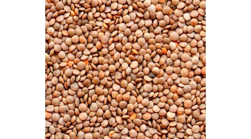 मसूर-सरसों में 400 रु. प्रति क्विंटल की वृद्धि