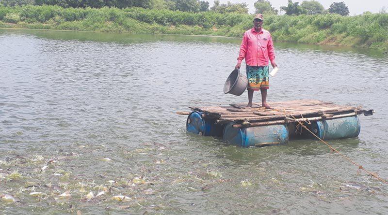 मछलीपालन से सवा एकड़ के तालाब में 6 लाख की सालाना कमाई