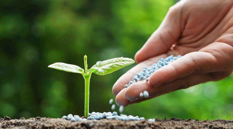 किसानों को डीएपी 1200 रु. में ही मिलेगी केंद्र सरकार का बड़ा फैसला